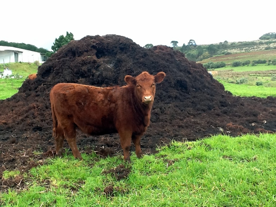 What Is Ethanol >> Manure To Energy
