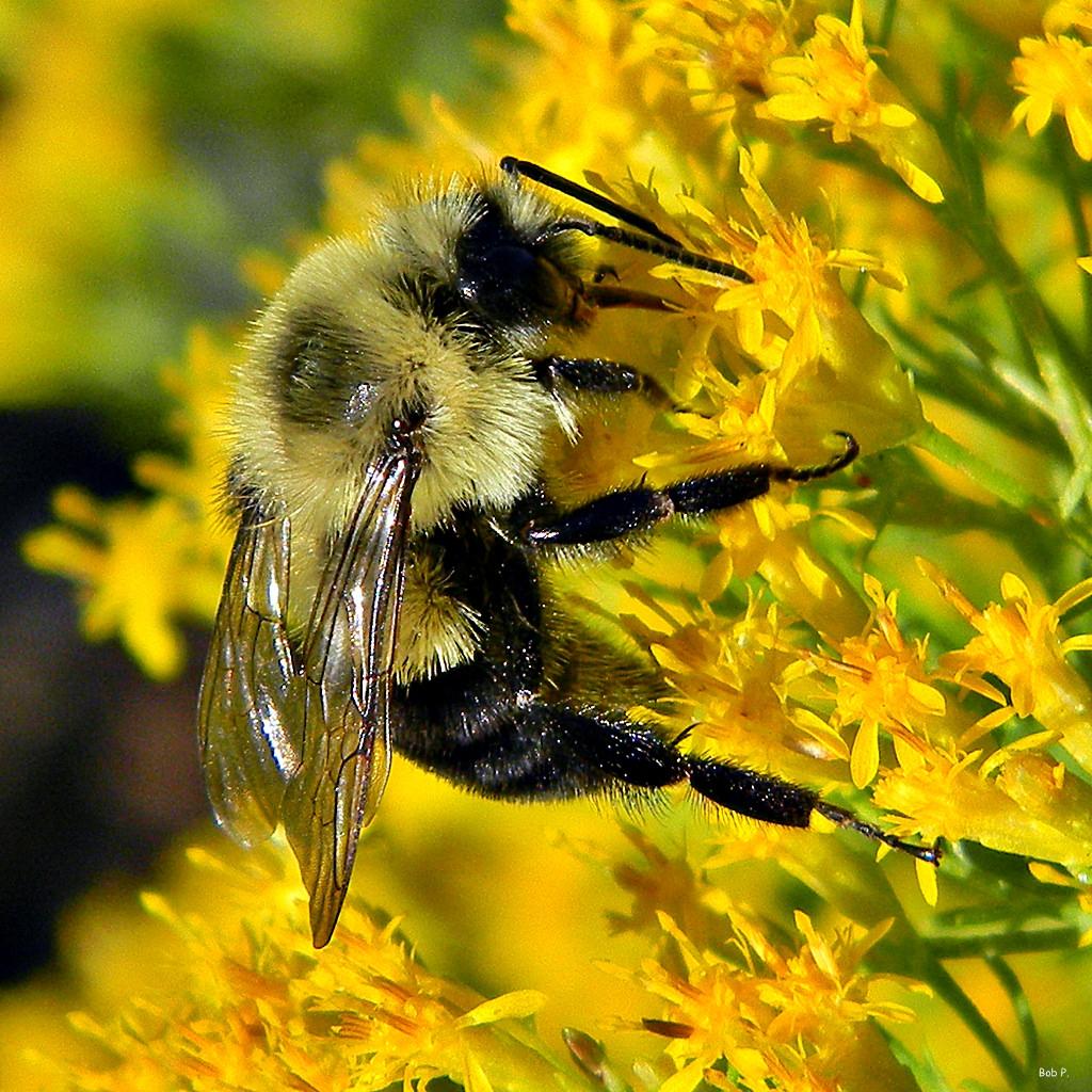 Wildflower Decline