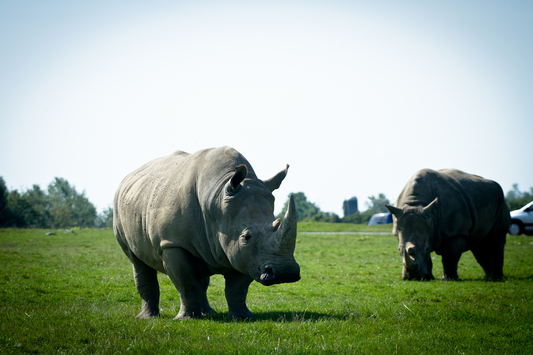 A Bad Year For Rhinos