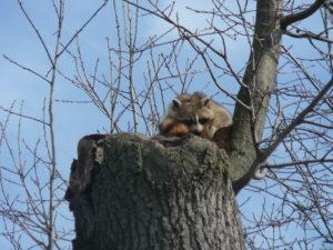 Wildlife Adapting To Cities
