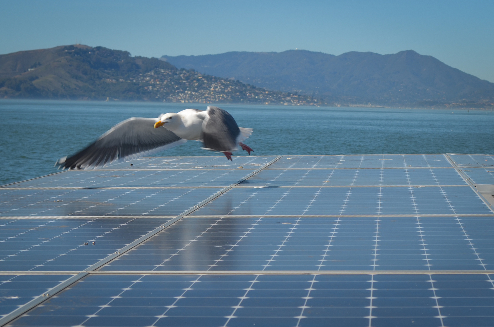 Mandatory Solar In San Francisco