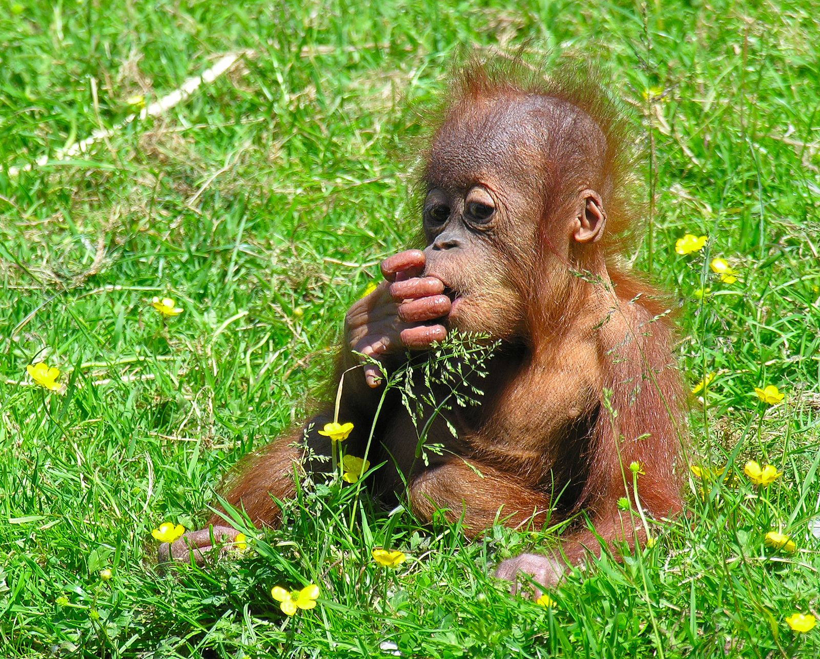 The Plight Of Orangutans