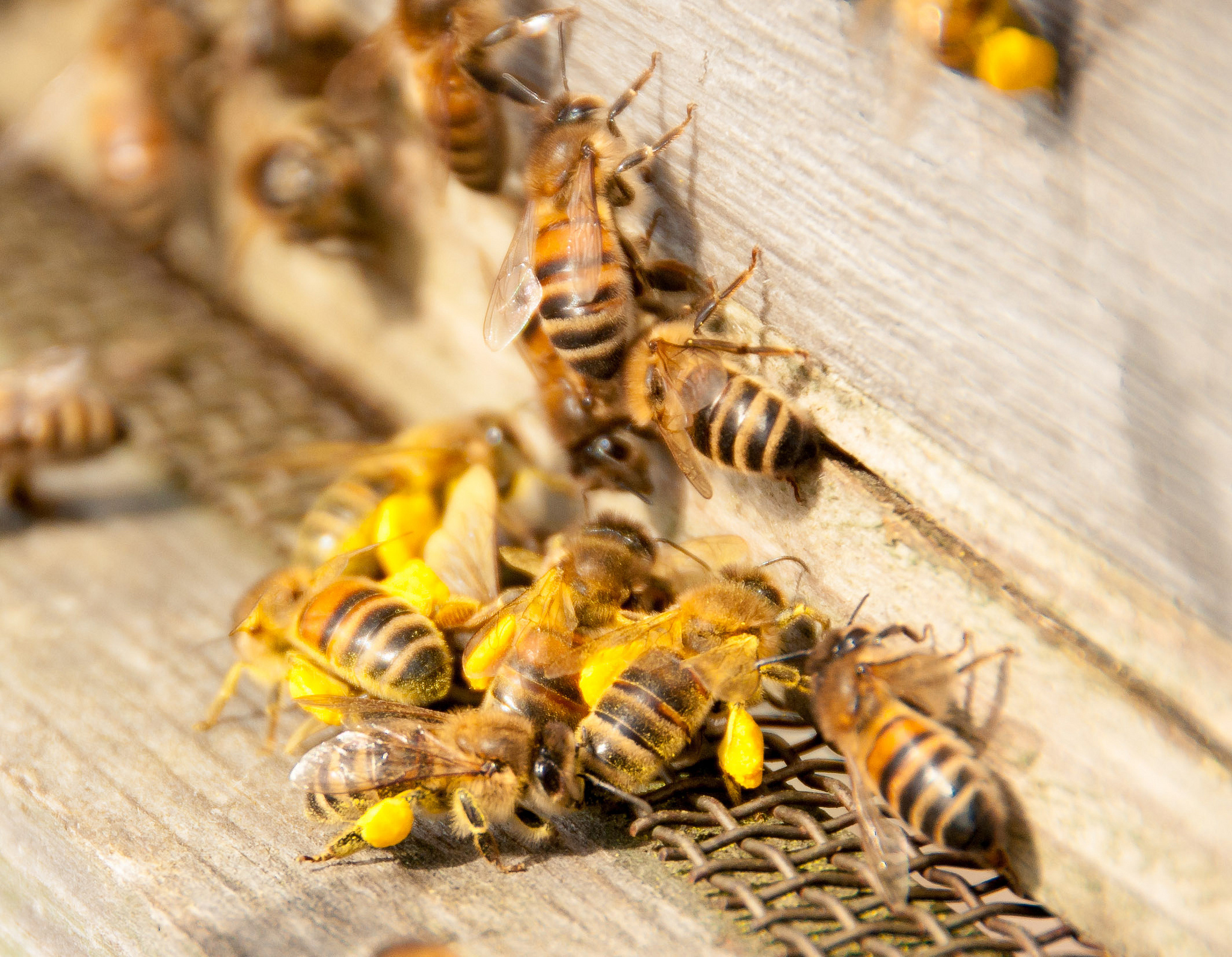 What Is Killing Bees?