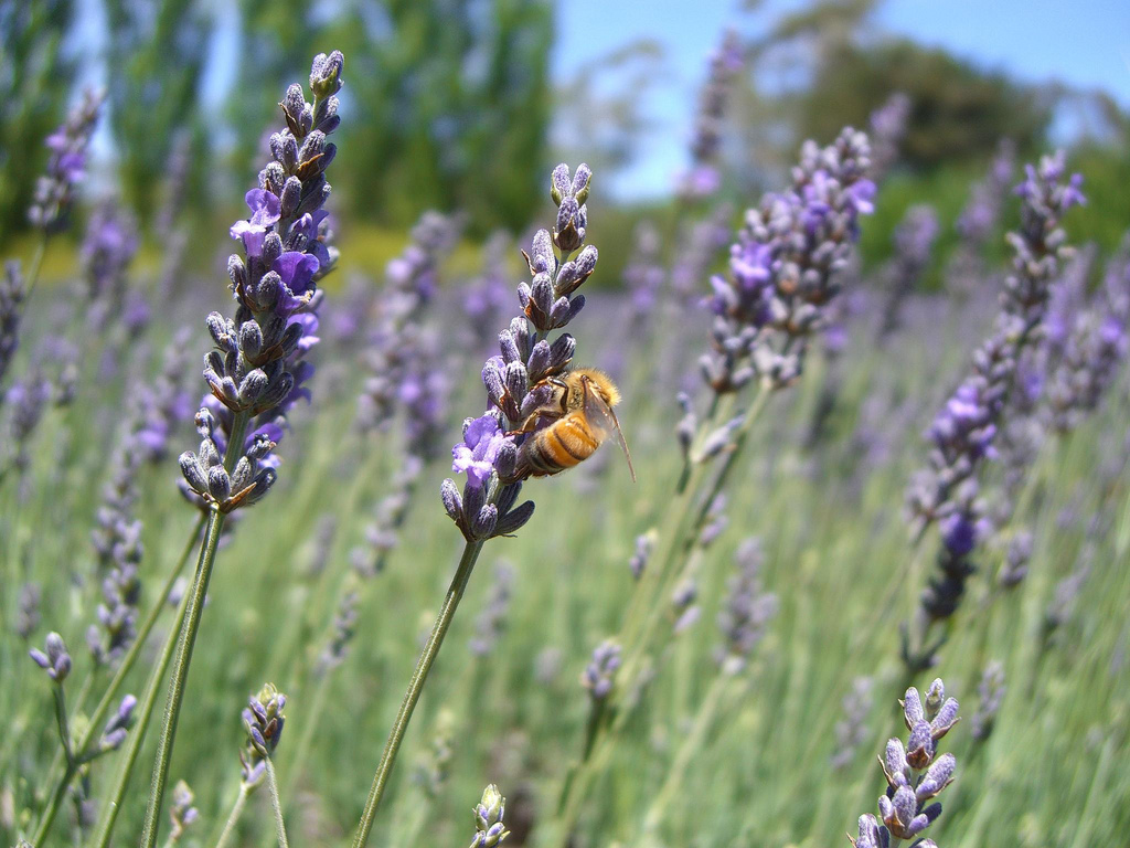 Declining Insect Populations