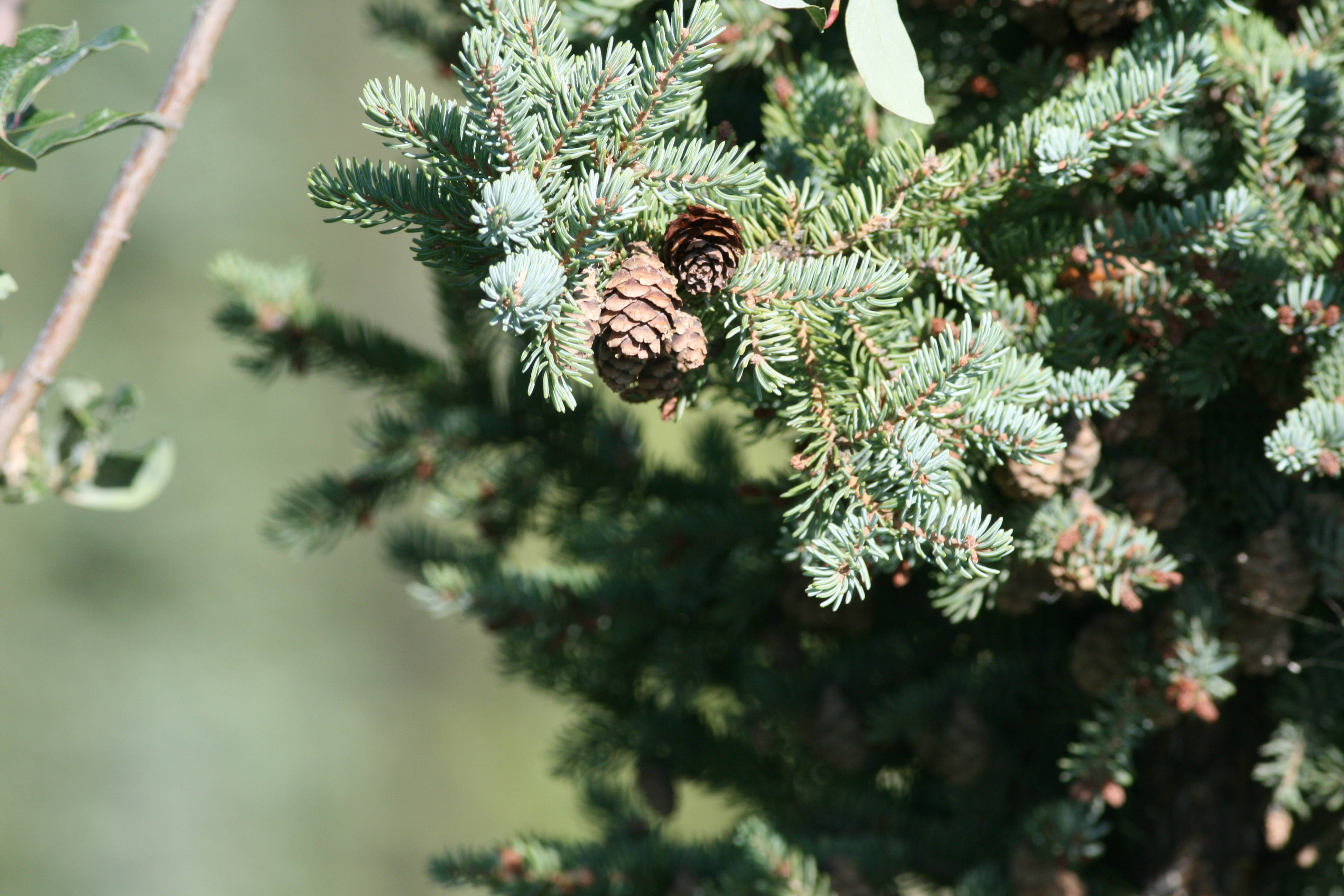 A Refuge For Black Spruce