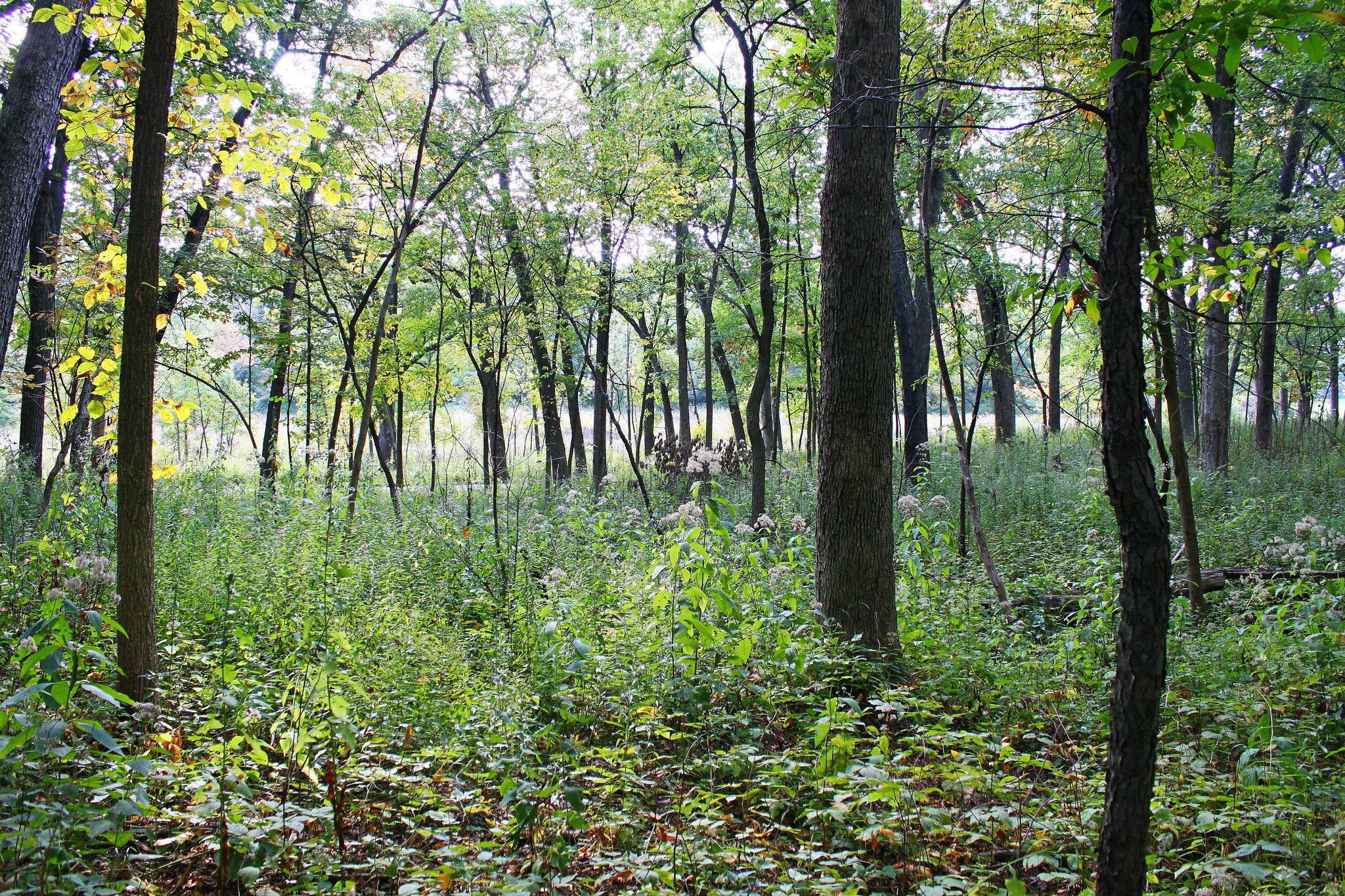 Small Forests And Climate
