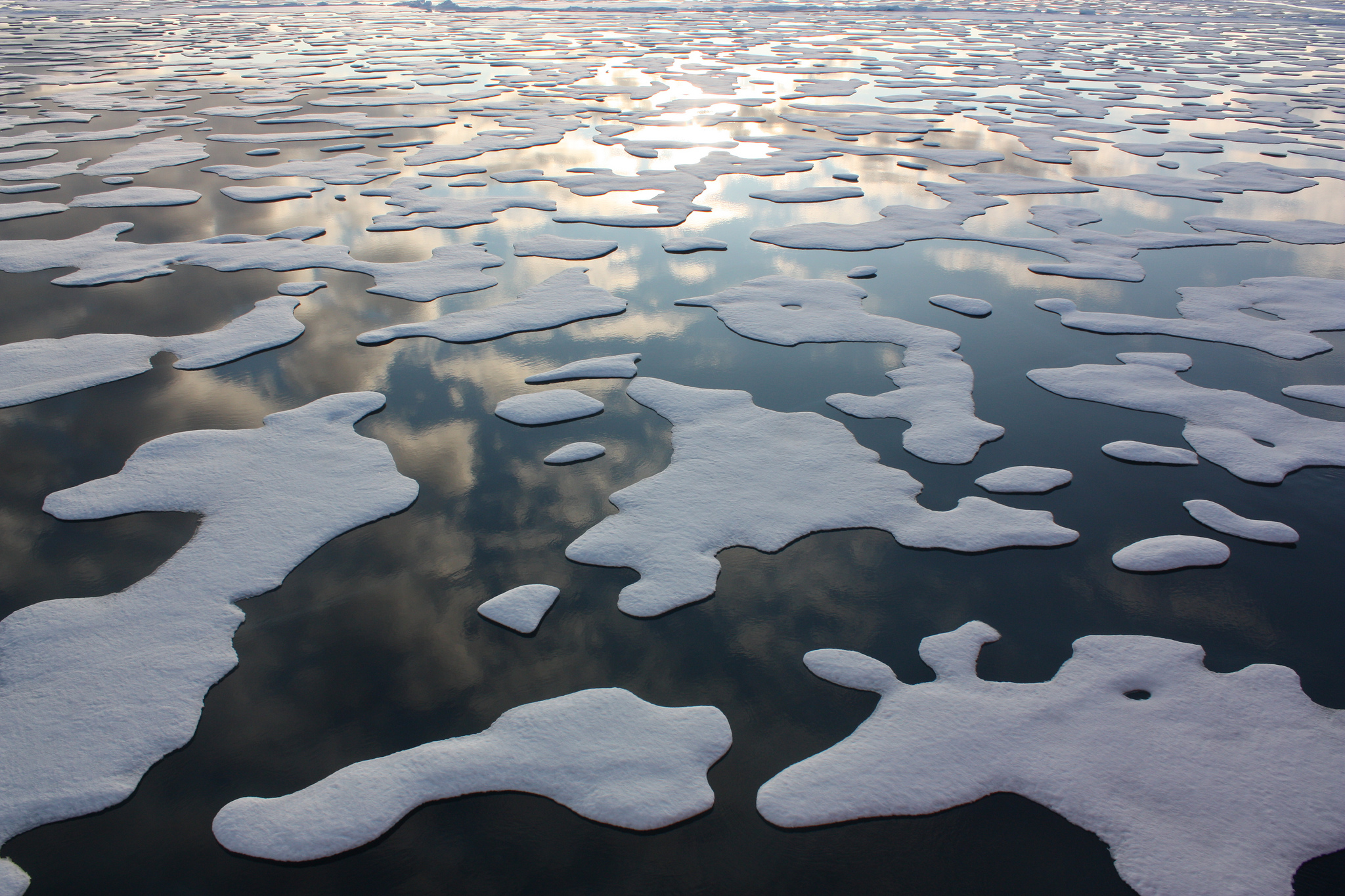 Melting Ice Adds Life To The Sea