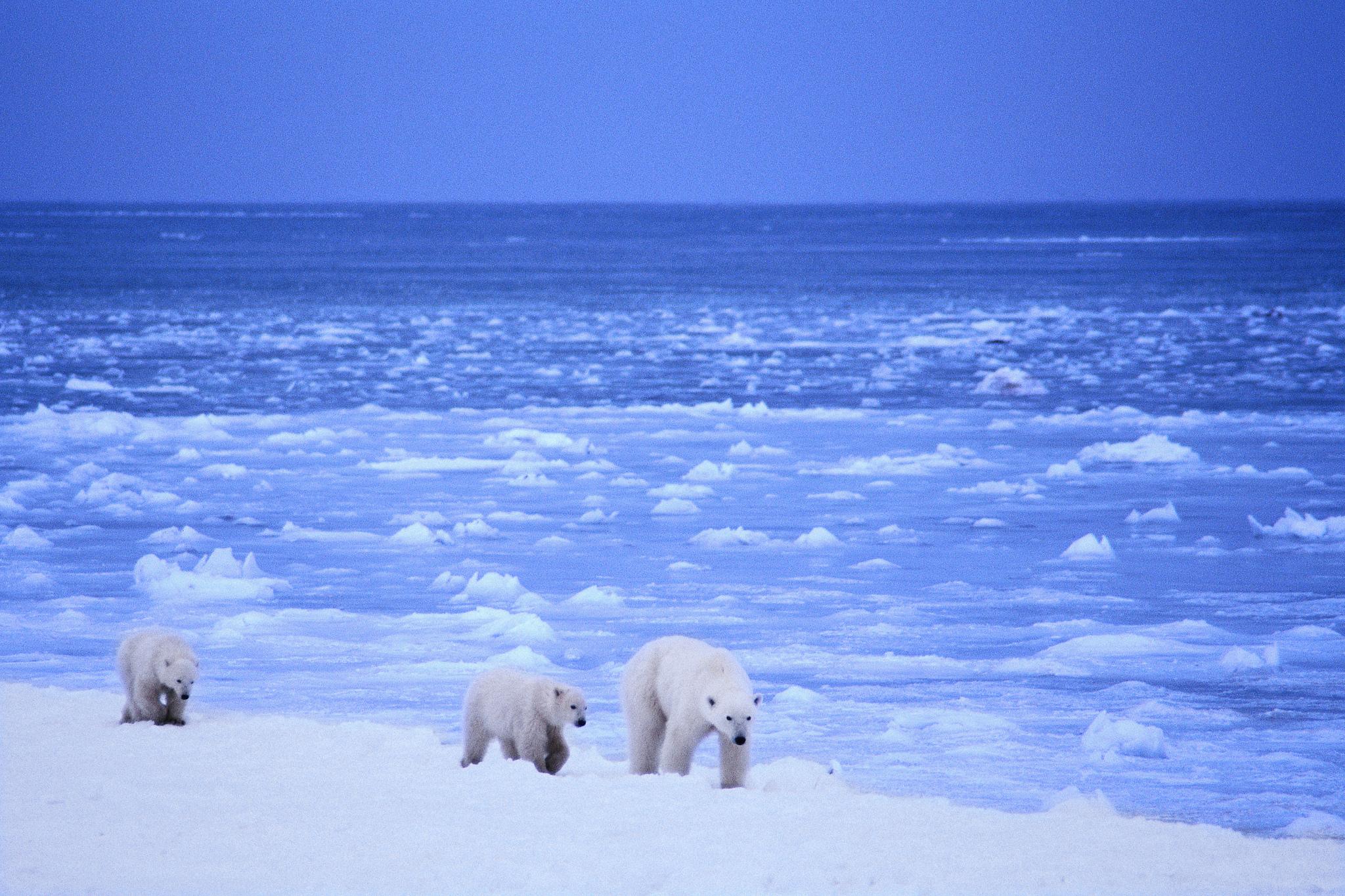 Plastic In The Arctic