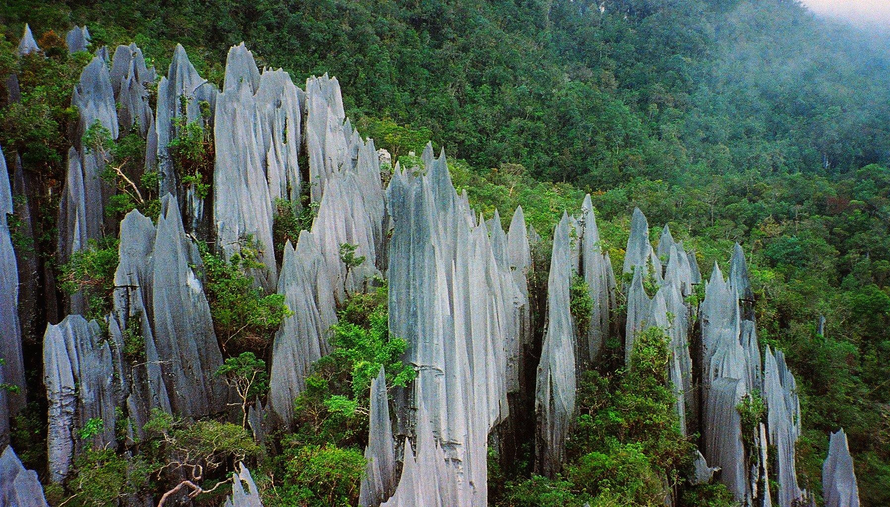 Saving Borneo's Forest