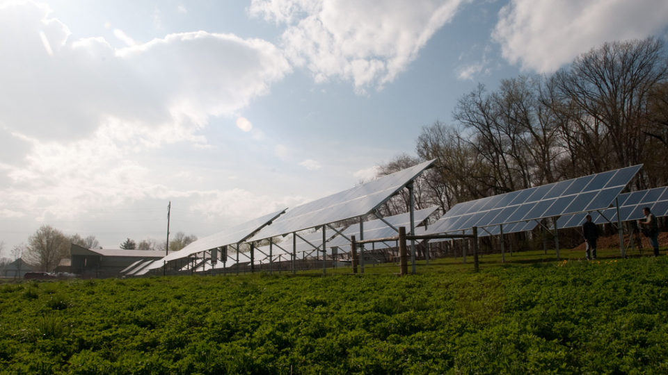 Farming In Solar Farms