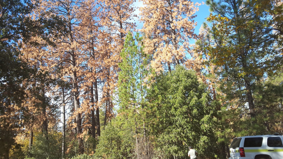 Losing Forests Is Felt Far Away
