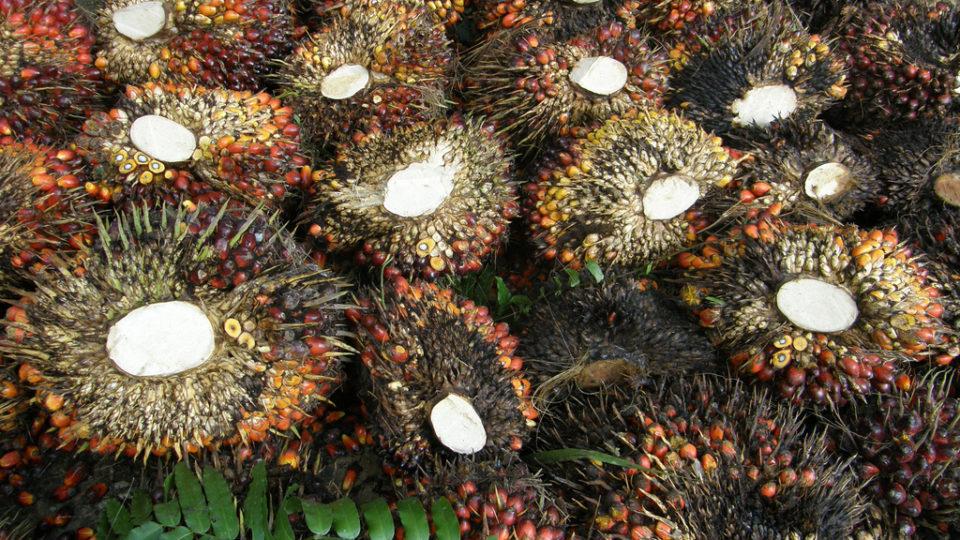 Deforestation-Free Palm Oil