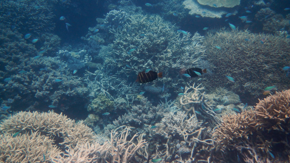 Is There Hope For Coral Reefs?