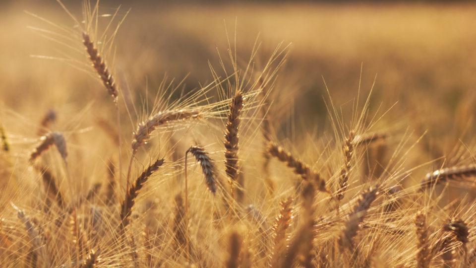 Speed Breeding Of Crops