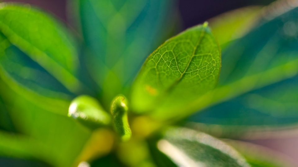 Hacking Photosynthesis