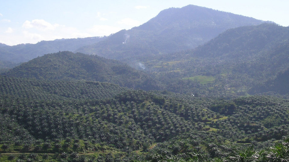 Indonesian Deforestation