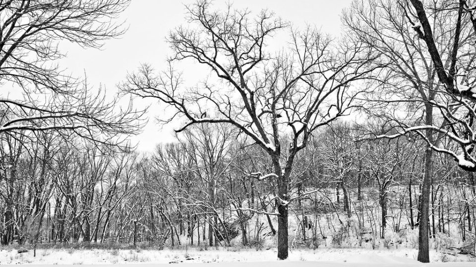 Climate Change And Harsh Winters