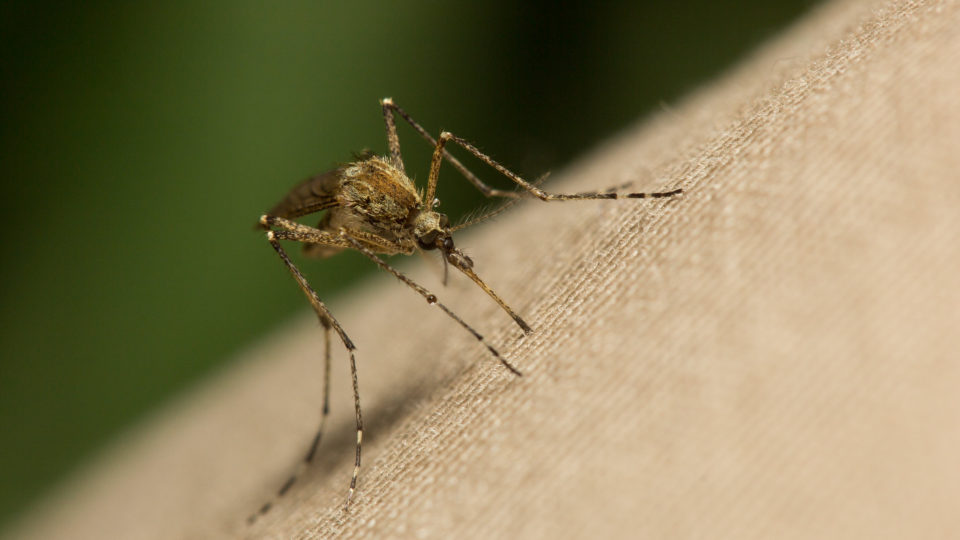 Controlling Malaria Without Chemicals