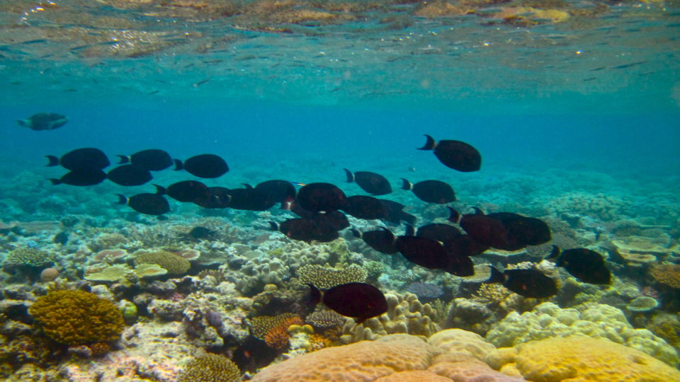 Pesticides In The Great Barrier Reef